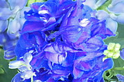 Blue Delphinium Framed Prints - Delphinium Blue Framed Print by Gwyn Newcombe