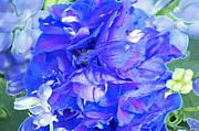 Delphinium Blue Print by Gwyn Newcombe