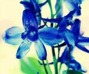 Blue Delphinium Framed Prints - Delphinium Framed Print by Cathie Tyler