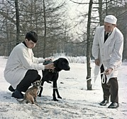 Dog Walking Prints - Demikhovs Laboratory Dogs, 1967 Print by Ria Novosti
