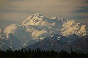Great Pyrography Metal Prints - DENALI      great one Metal Print by Bj Hodges