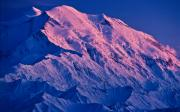 Denali National Park Prints - Denali Alpenglow Print by Tim Rayburn