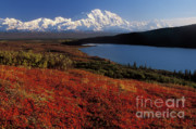 Out West Photo Posters - Denali Evening Poster by Sandra Bronstein