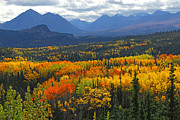 Fall Foliage Photos - Denali National Park Greeting by Alan Lenk
