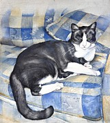Fat Cat Framed Prints - Denises cat Framed Print by Sandra Phryce-Jones