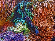 Clown Fish Drawings - Denver Aquarium photograph by Howard Perry