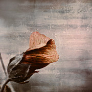 Texture Flower Metal Prints - Deploiement - 05ft01b Metal Print by Variance Collections