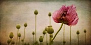 Textures Photos - Depth Of Poppy Field by Priska Wettstein