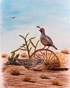 Desert Wildlife Paintings - Desert Art Gambels Quail by Judy Filarecki