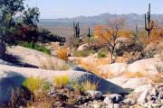 Greg Taylor - Desert Autumn
