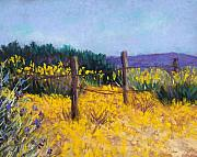 Fence Pastels - Desert Bloom by Candy Mayer