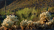 Desert Southwest Photos - Desert Cactus Panorama  by Dave Dilli