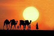 Rajasthan Prints - Desert Camel Rides Print by Amateur photographer, still learning...