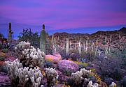 Desert Prints - Desert Garden Print by Eric Foltz