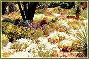 Southwest Mixed Media Posters - Desert Garden Poster by Linda  Parker