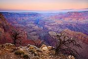 Grand Canyon Framed Prints - Desert Glow Framed Print by Mike  Dawson