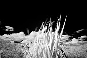 I Feel Prints - Desert Grass Print by Michael Kloth