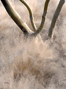 Desert Digital Art - Desert Grasses I by Linda  Parker