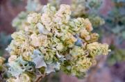 Subtle Colors Photo Prints - Desert Holly Print by Amber Lea Starfire