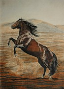 Wild Pony Drawings Prints - Desert horse Print by Melita Safran