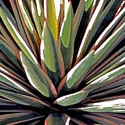 Plants Mixed Media Framed Prints - Desert Impressions 1 Framed Print by Linda  Parker