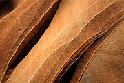 Sandstone Photo Prints - Desert Lines Print by Mike  Dawson