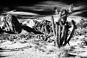 Conservation Area Framed Prints - Desert Living Framed Print by John Rizzuto