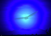 Birds In Flight At Night Metal Prints - Desert Nights Metal Print by Debra     Vatalaro