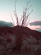 Sunset Photos - Desert Plant and Sunset by Irina  March