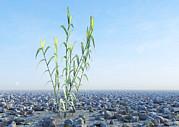 Desert Plant, Artwork Print by Carl Goodman
