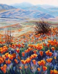 California Poppy Paintings - Desert Poppies by Margaret  Plumb