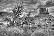 Blanding Prints - Desert Shrub at Monument Valley Print by Brian Stamm