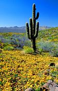 Frank Houck - Desert Spring