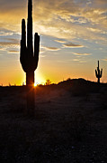 Kenny Jalet Acrylic Prints - Desert Sunset 3 Acrylic Print by Kenny Jalet
