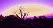Southern Utah Digital Art Posters - Desert Sunset with Silhouetted Tree 2 Poster by Steve Ohlsen