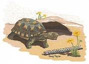 Burrowing Painting Framed Prints - Desert Tortoise Framed Print by Terry Taylor