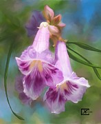 Orchids Art - Desert Willow Floral Wall Art by Judy Filarecki
