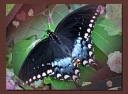 The Colors Of Butterflies Posters - Designed Natural Butterfly Poster by Debra     Vatalaro