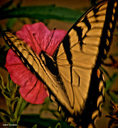 The Colors Of Butterflies Posters - Designer Butterfly Works Poster by Debra     Vatalaro