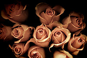 Roses Metal Prints - Desire Metal Print by Amy Tyler