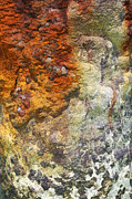 Reddish Flaking Iron Oxide Posters - Detail of a Rusted Dock Pier II Poster by David Letts