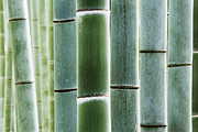 Over-exposed Metal Prints - Detail of Bamboo in a Forest Metal Print by Jeremy Woodhouse