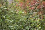 Ground Level View Framed Prints - Detail Of Spider Web Framed Print by Craig Tuttle