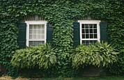 Cooperstown Photos - Detail Of The Ivy-covered James by Raymond Gehman