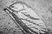 Dragon Fly Photo Prints - Detailed Dragon Flys Wing Print by Susan Stone