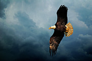 Flying Eagle Prints - Determination Print by Lois Bryan
