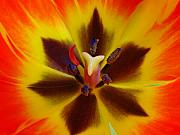 Abstract Tulip Floral Posters - Devil Inside Poster by Juergen Roth