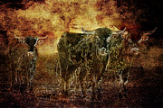 Steers Posters - Devils Herd - Texas Longhorn Cattle Poster by Cindy Singleton