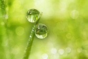 Fresh Green Posters - Dew Drop Green Poster by Sharon Johnstone