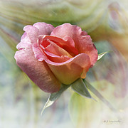 Masked Digital Art Posters - Dew Drop Pink Rose Poster by J Larry Walker
